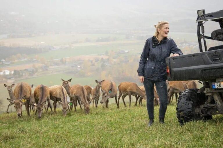 Hjort og dame ute på et jorde